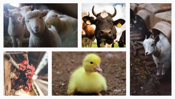 תכנית קולר-מנמון לזכויות ורווחת בעלי חיים