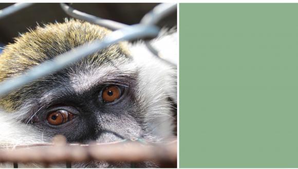 אדם-חיה: היבטים משפטיים, חברתיים ואתיים
